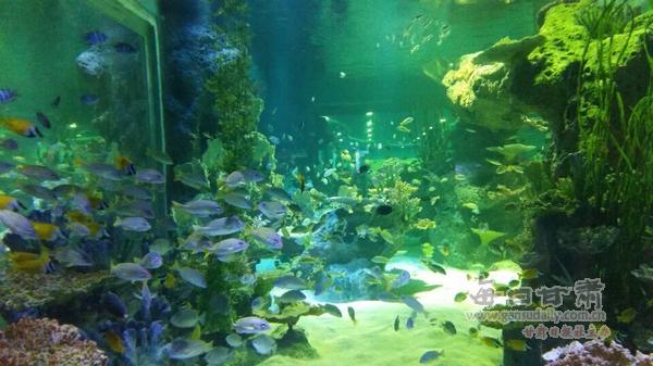 壁纸 海底 海底世界 海洋馆 水草 水生植物 水族馆 600_337