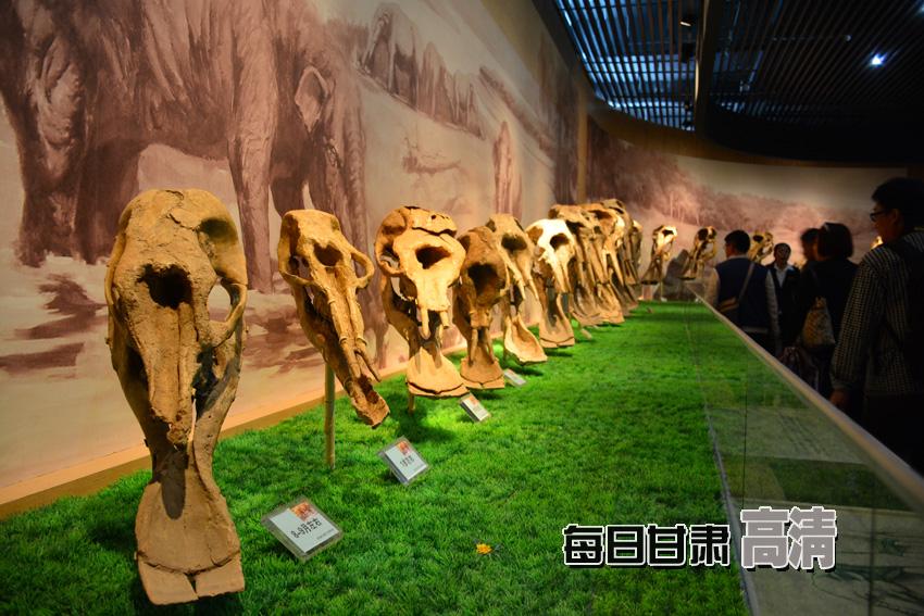 古代宝藏男孩-250万年的远古时代,和政曾是古脊椎动物繁衍生息的乐园,境内出土