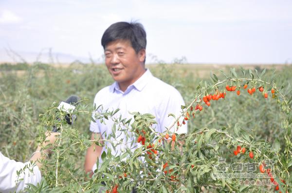 7月14日,靖远县坤元种养殖农民专业合作社理事长王兴飞向记者团讲