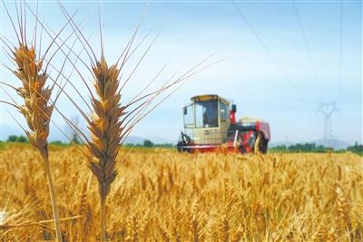 [说明]小麦的生长过程学生作品