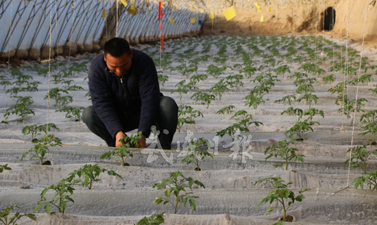 武威凉州区下双镇加快出口农产品示范基地建设