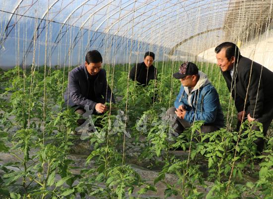 武威凉州区下双镇农户应用技术促进农作物增收