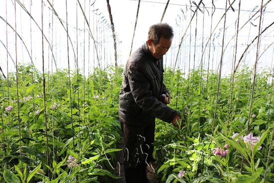 武威民勤县大坝镇农户发展日光温室种植促增收