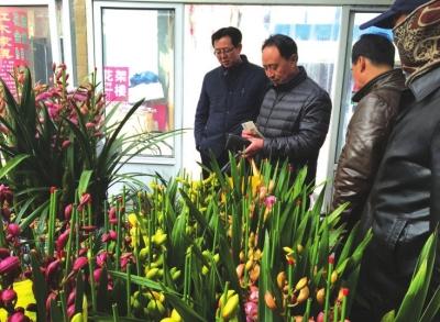 兰州:绿叶红花迎新春-甘肃-每日甘肃网