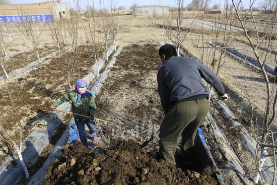 武威市凉州区永昌镇农户发展示范园实现经济效益