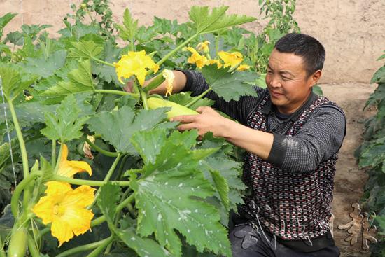 甘肃武威:日光温室扩大规模(图)