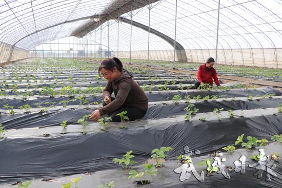 武威市民勤县打造精品园区 发展现代农业(组图)