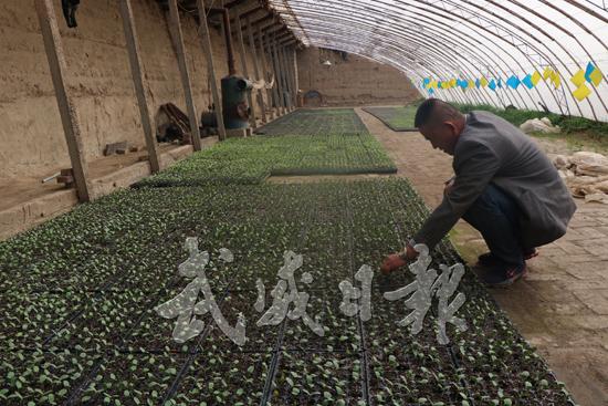 武威凉州区发放镇农民专业合作社效益可观
