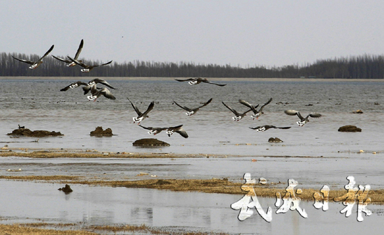 武威市:湿地公园候鸟飞