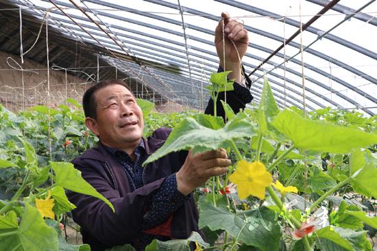 武威民勤县蔡旗镇沙滩村通过科学管理提高小乳瓜产量