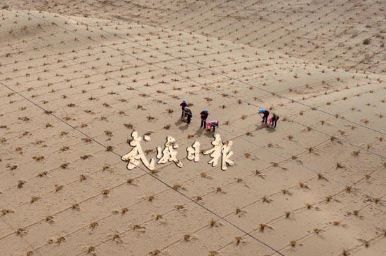 筑沙障 播希望——武威市凉州区荣生路南侧沙漠压沙现场(图)