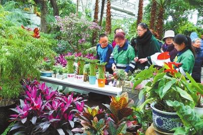 市民在植物园选购花卉