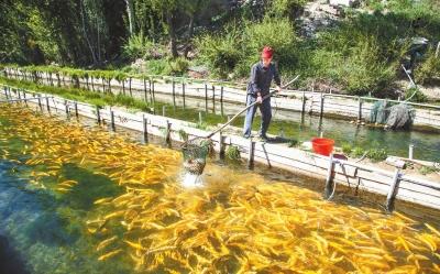 年产鲜鱼50万公斤