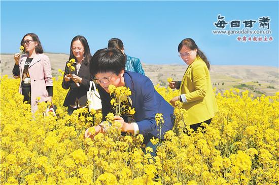 甘肃·会宁油菜花文化旅游节开幕