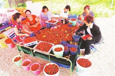 林颖农民专业合作社的樱桃熟了