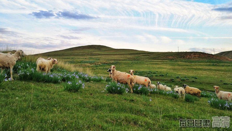 山丹:焉支山下水草肥美牛羊欢