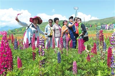 游客在和政县富农花海中赏花拍照