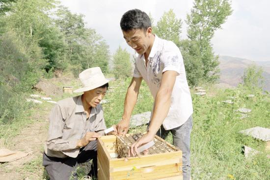 陈月平养蜂记