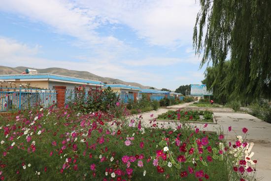 【图片新闻】凉州区张义镇整治村容村貌-武威-每日
