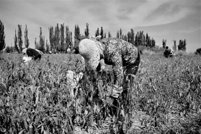 武威民勤:环境变好了 村民富裕了