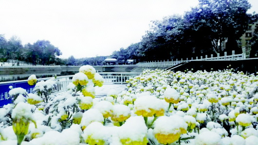 初雪造访铜城