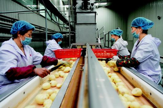 """安定:""""小土豆""""做成大产业"""