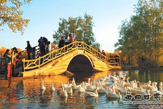 游客在金塔沙漠胡杨林景区游览