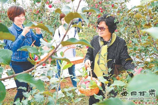 庆城县苹果产业快速发展