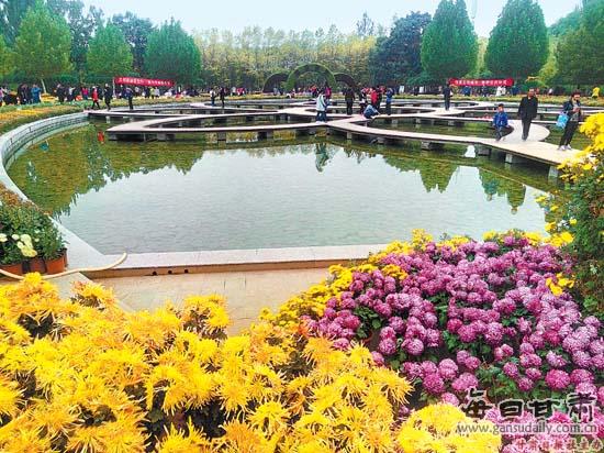 兰州植物园菊花竞相绽放