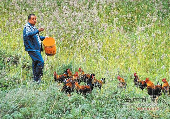 靖远农民发展林地立体复合经济
