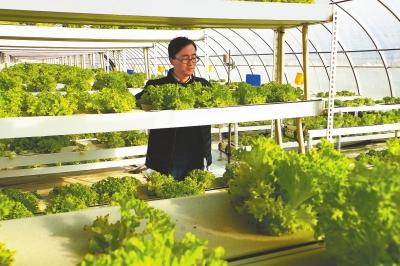 靖远县大力发展设施农业