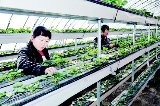 安定大力发展观光示范农业
