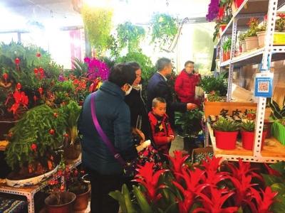 兰州花卉市场:节后价低销量好