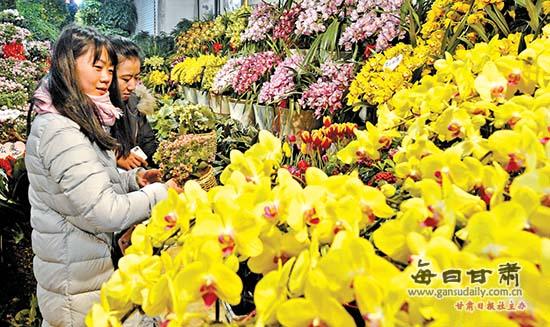 新春佳节 兰州市各类花卉热销