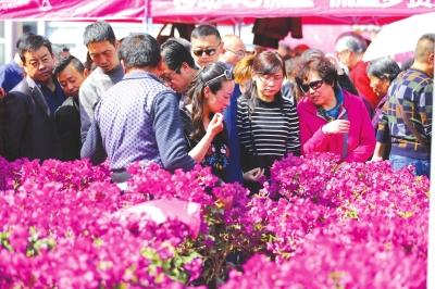 兰州植树节花卉展销会落幕