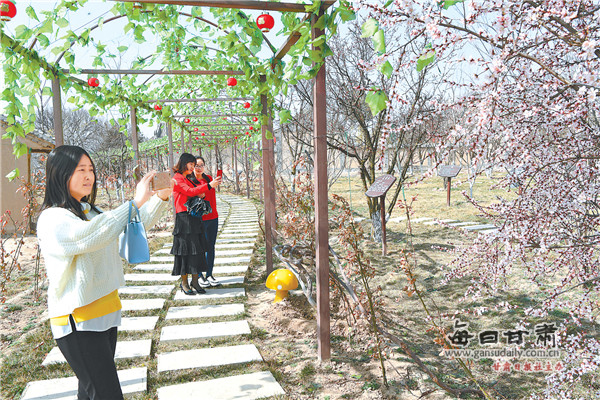 游客在泾川县凤凰村踏青赏花