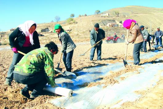 平川因地制宜发展抗旱农业