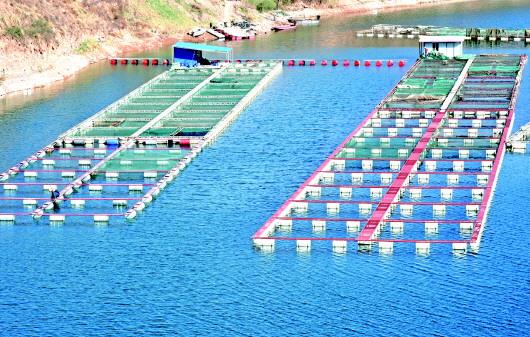 网箱养鱼助增收