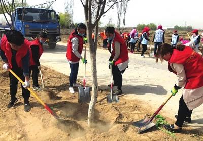 兰州西固区开展义务植树活动