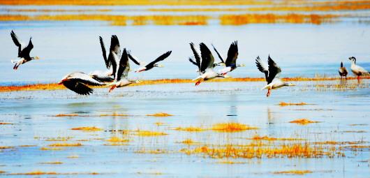 海子湿地 鸟类天堂