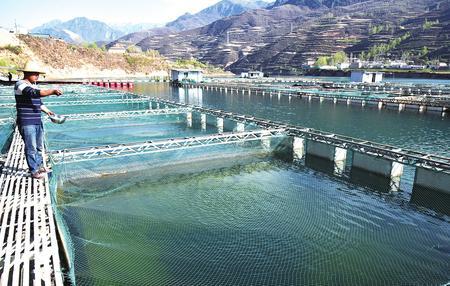 渭源:网箱养鱼助农增收