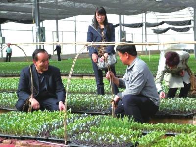 永登县红城镇一村一品特色种植见闻