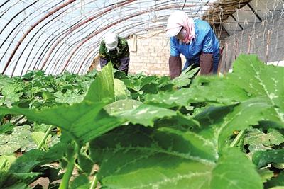 山丹县加大新型农业经营主体培育力度