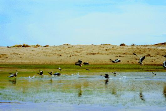 湿地变乐园 水鸟乐作客