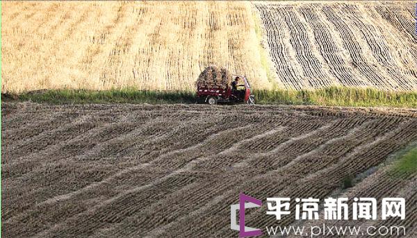 平凉东部小麦陆续开镰收割