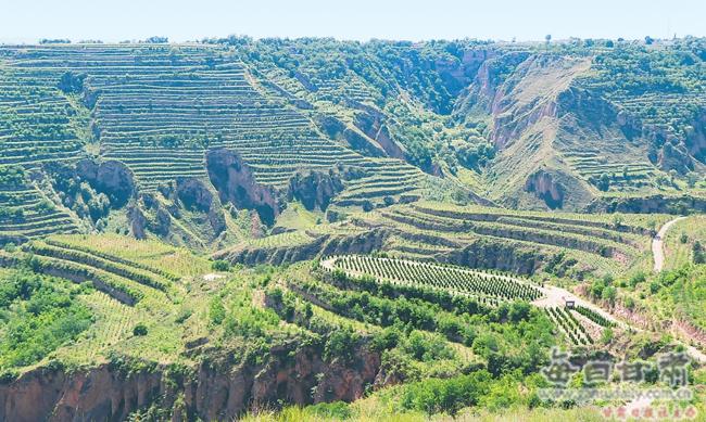 正宁县持续加大植绿步伐