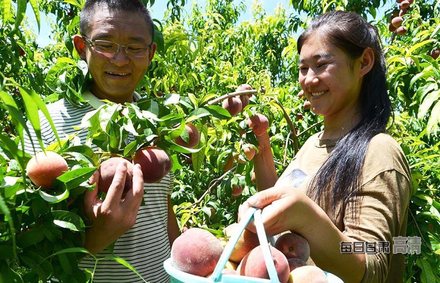 张掖:桃子熟了 果农笑了(图)