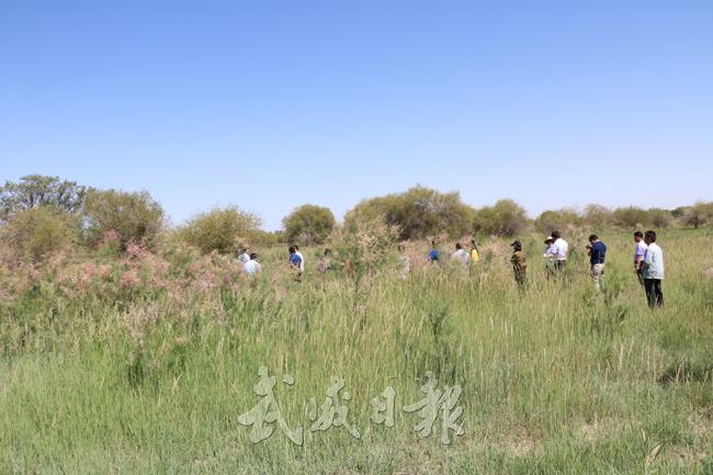 民勤县加大湿地保护力度