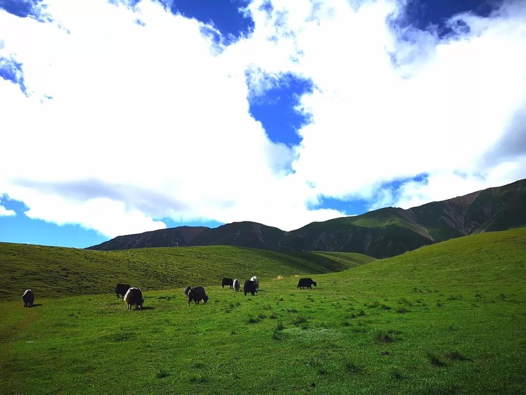 H5丨这里的夏天只有20℃,裕固民族风吹过,骏马在奔驰……
