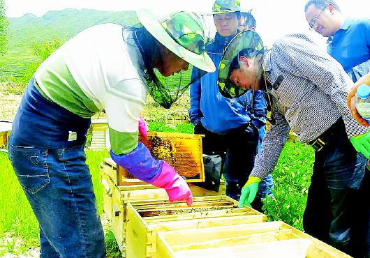 """卓尼中蜂养殖产业扶贫让农牧户尝到了""""甜头"""""""